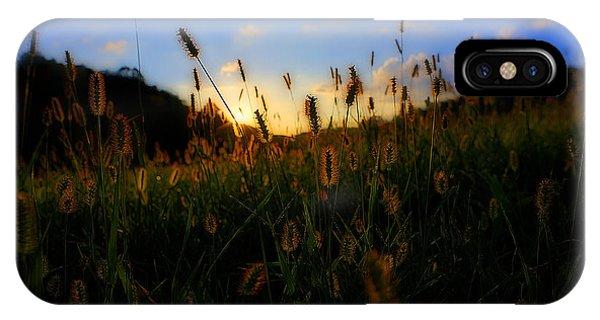 Grass In Field At Sunset Phone Case by Dan Friend