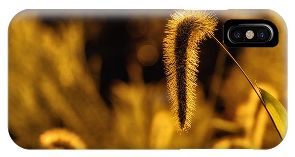 Grass In Golden Light IPhone Case
