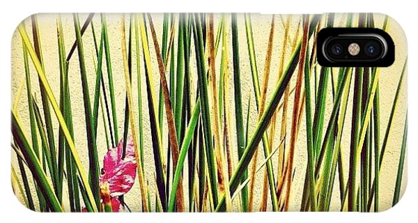 Scenic iPhone Case - Grasses by Julie Gebhardt