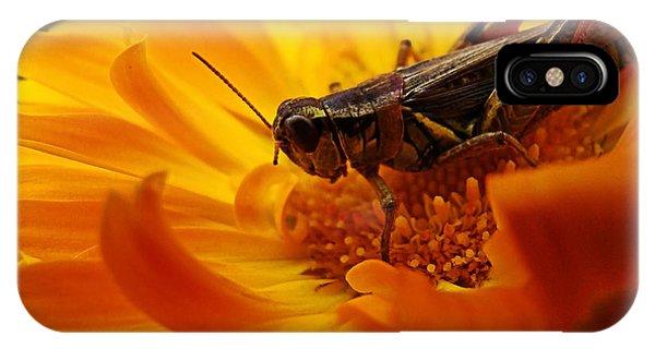 Grasshopper iPhone Case - Grasshopper Luncheon by Lianne Schneider