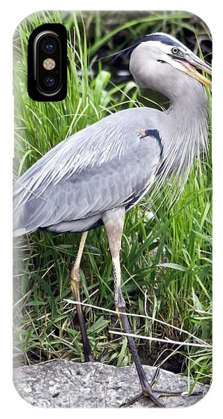 Great Blue Heron Catches Dinner-1 Phone Case by Ilene Hoffman