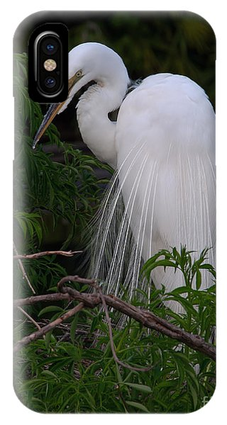 Great Egret Nesting IPhone Case