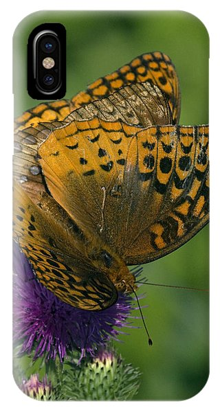 Great Spangled Fritillaries On Thistle Din108 IPhone Case