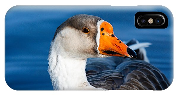Greater White Frontal-goose Striking A Pose IPhone Case