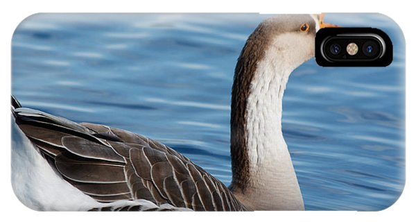Greater White-fronted Goose Paddling Away IPhone Case