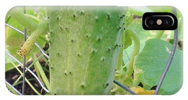 Green iPhone Case - #green #cucumber In My #garden by Irina Moskalev