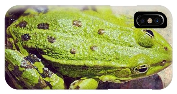 Green Frog Sitting On Stone IPhone Case