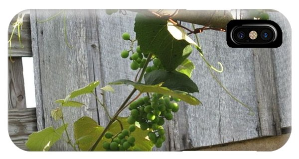 Green Grapes On Rusted Arbor IPhone Case