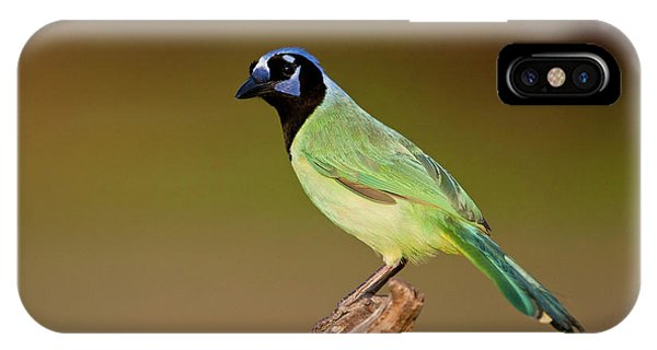 Green Jay 2 IPhone Case
