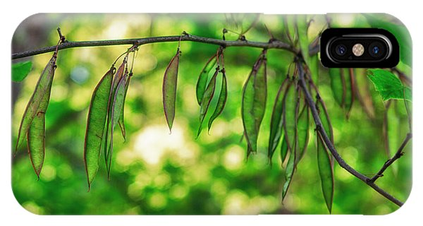 Green Redbud Seed Pods IPhone Case