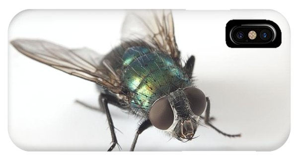 Greenbottle Fly Phone Case by Dr Jeremy Burgess