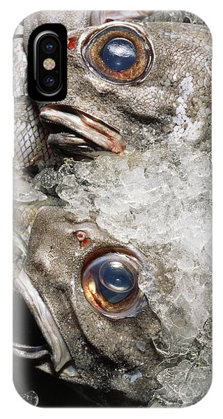 Grenadier Fish Packed In Ice After Being Caught IPhone Case