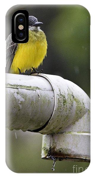 Flycatcher iPhone Case - Grey-capped Flycatcher by Heiko Koehrer-Wagner