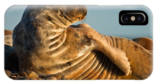 Grey Seal Halichoerus Grypus Watching IPhone Case