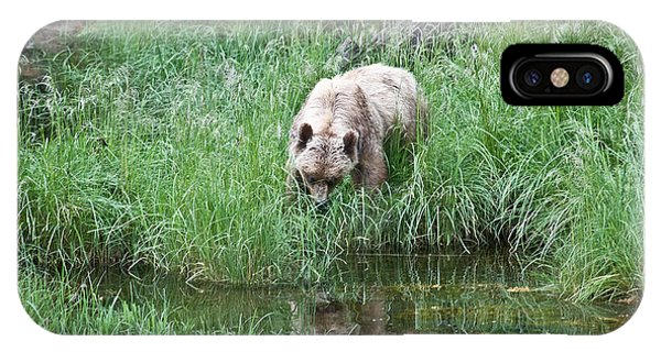 Grizzly Bear And Reflection On Prince Rupert Island Canada 2209 IPhone Case