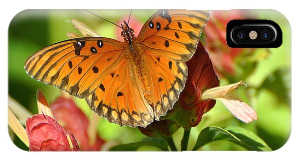 Gulf Fritillary Butterfly On Flower IPhone Case