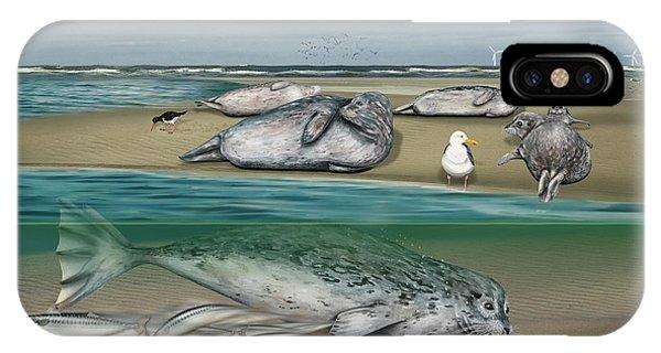 Habitat Common Seals  - Pinnipeds - Marine Mammals - Mudflat Tideland - Phoque Commun-banc De Sable  IPhone Case