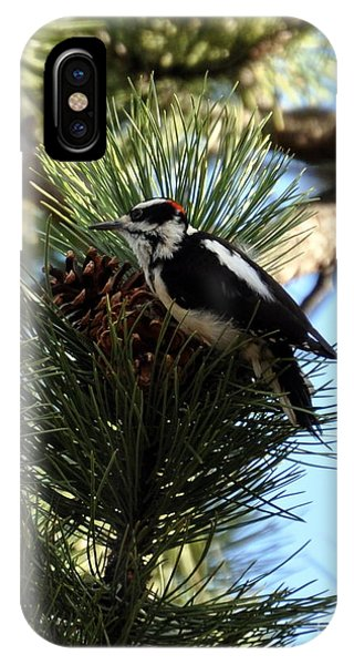 Hairy Woodpecker On Pine Cone IPhone Case