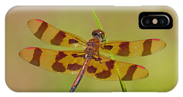 Halloween Pennant IPhone Case