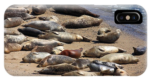 Half Moon Bay iPhone Case - Harbor Seals Sunbathing On The Beach . 40d7553 by Wingsdomain Art and Photography