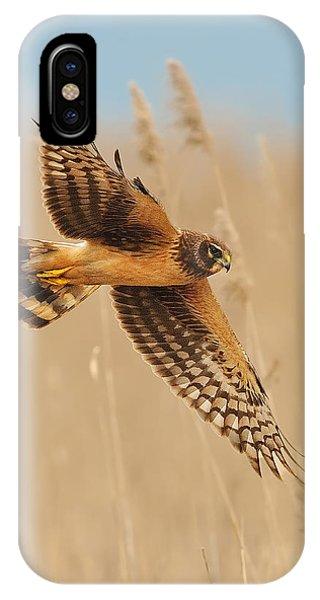 Harrier Over Golden Grass IPhone Case