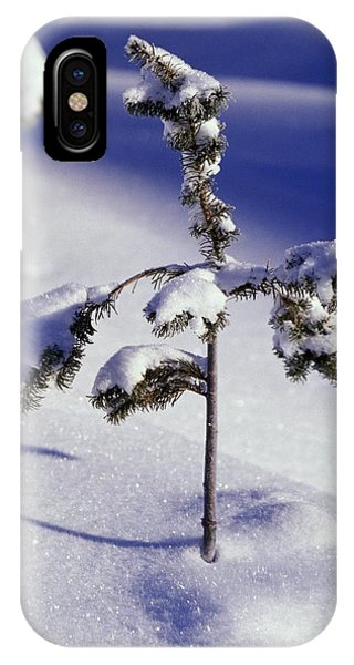 Heavy Snow On Young Pine Tree IPhone Case