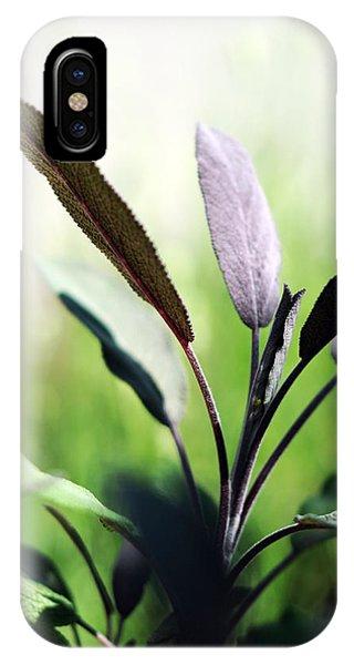 Herb Garden Purple Sage IPhone Case