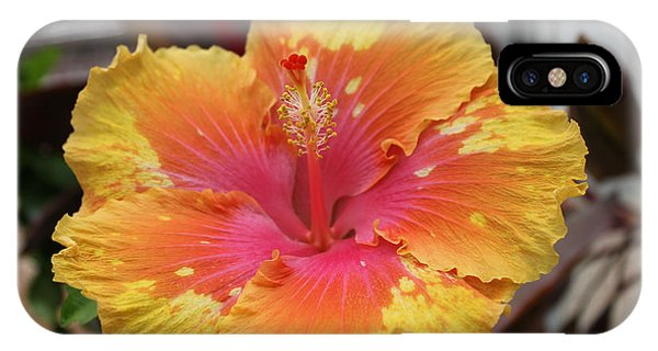 Hibiscus Yellow IPhone Case