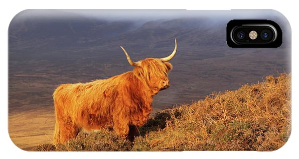 Highland Cattle Landscape IPhone Case