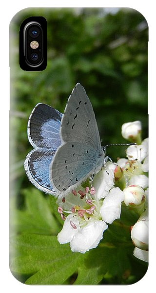 Holly Blue IPhone Case