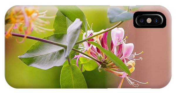 Honey Suckle Flower IPhone Case