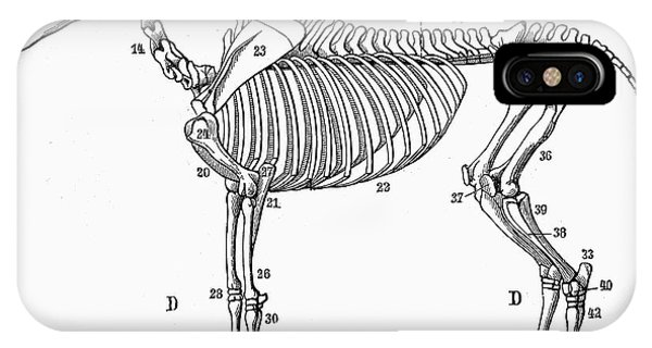 Horse Anatomy Iphone Cases Page 2 Of 4 Fine Art America