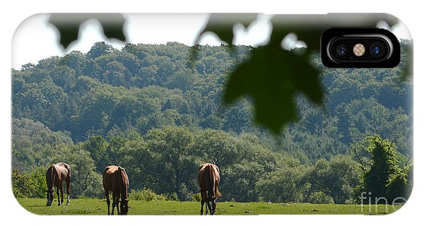 Horses And Summer Breeze IPhone Case