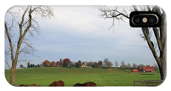 Horses Grazing IPhone Case