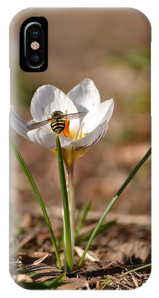 Hoverfly Visitng A Crocus IPhone Case