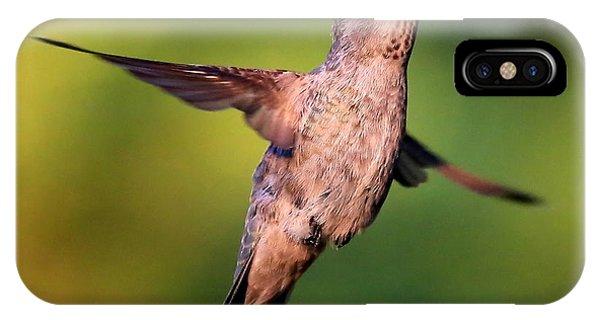 Stop Action iPhone Case - Hummingbird Hello by Carol Groenen