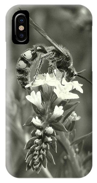 Hunter Wasp On Heliotrope IPhone Case