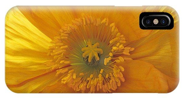 Iceland Poppy 4 IPhone Case