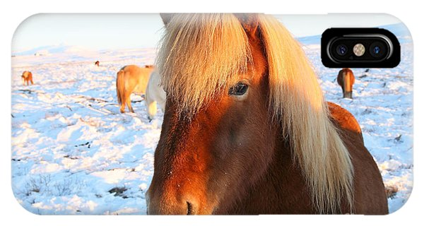 Icelandic Horse IPhone Case