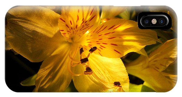 Illuminated Yellow Alstromeria Photograph IPhone Case