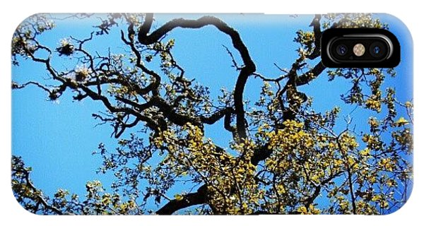 Tree iPhone Case - Indecision II by James Granberry