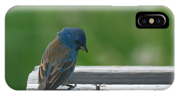 Bunting iPhone Case - Indigo Bunting And Friend by Susan Capuano