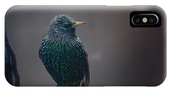 Starlings iPhone Case - Infamous by Susan Capuano