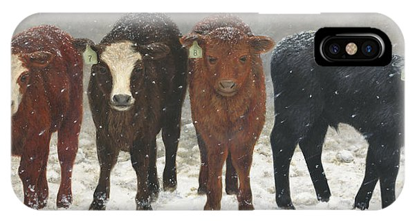 IPhone Case featuring the painting Inquisitive Calves by Tammy Taylor