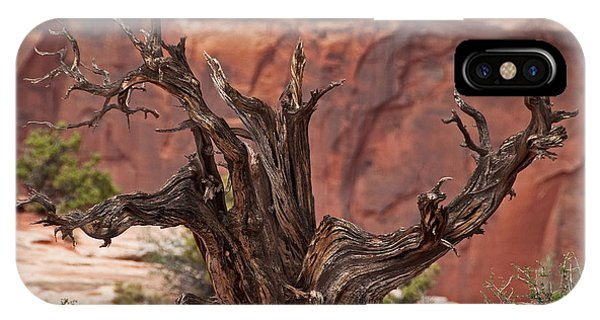 Juniper At Canyonlands IPhone Case