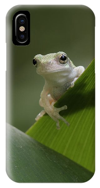 Juvenile Grey Treefrog IPhone Case