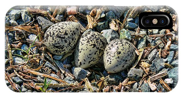 Killdeer iPhone Case - Killdeer Bird Eggs by Jennie Marie Schell
