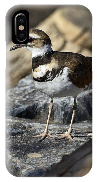 Killdeer iPhone Case - Killdeer by Saija  Lehtonen