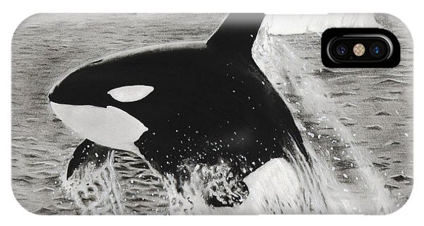 Killer Whale IPhone Case