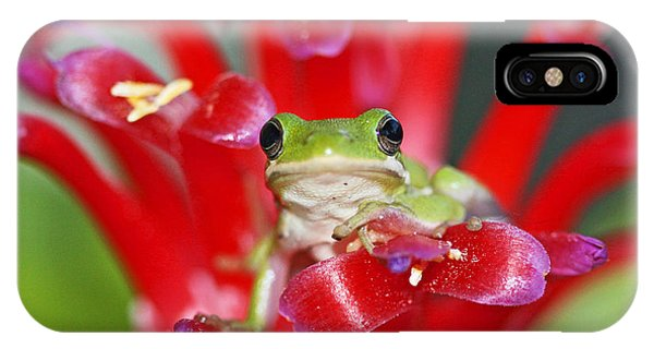 Kiss A Prince Frog IPhone Case